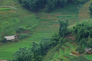 ベトナム サパの棚田の写真素材 [FYI03878801]