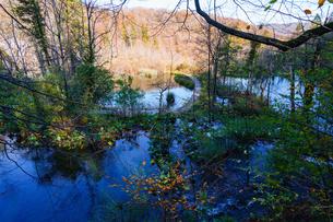 秋のプリトヴィッツェ湖群国立公園の写真素材 [FYI03878834]