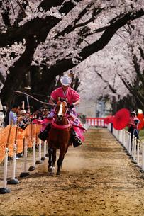 桜流鏑馬の写真素材 [FYI03878930]