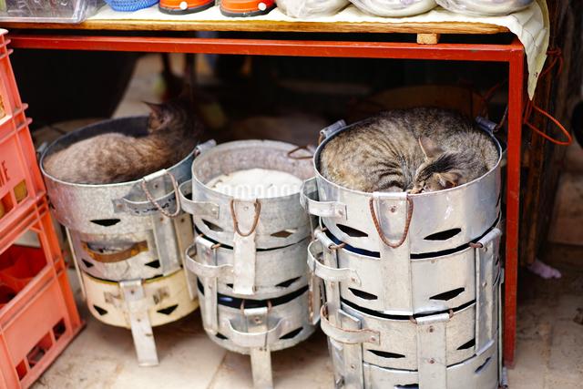 ティトゥアンの市場の猫の写真素材 [FYI03878990]