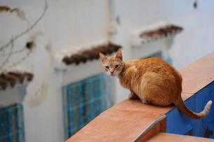 モロッコ シャウエンの猫の写真素材 [FYI03879009]