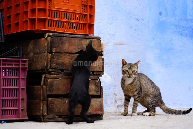 モロッコ シャウエンの猫の写真素材 [FYI03879010]