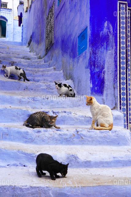 モロッコ シャウエンの猫の写真素材 [FYI03879011]