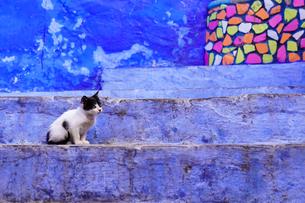 モロッコ シャウエンの猫の写真素材 [FYI03879022]