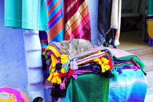 モロッコ シャウエンの猫の写真素材 [FYI03879024]