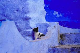 モロッコ シャウエンの猫の写真素材 [FYI03879028]