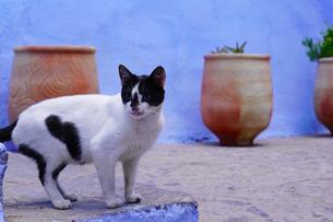 モロッコ シャウエンの猫の写真素材 [FYI03879033]