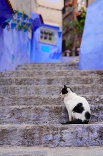 モロッコ シャウエンの猫の写真素材 [FYI03879034]