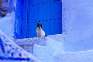 モロッコ シャウエンの猫の写真素材 [FYI03879036]