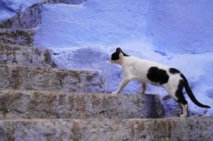 モロッコ シャウエンの猫の写真素材 [FYI03879037]