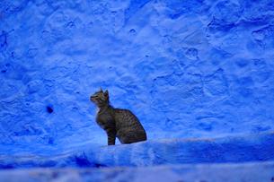 モロッコ シャウエンの猫の写真素材 [FYI03879038]