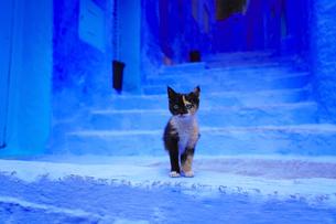 モロッコ シャウエンの仔猫の写真素材 [FYI03879040]