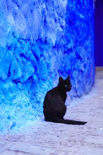 モロッコ シャウエンの猫の写真素材 [FYI03879041]