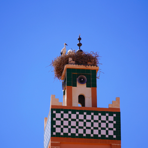 モロッコのコウノトリの写真素材 [FYI03879070]