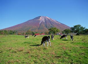 放牧場 鳥取県の写真素材 [FYI03881512]