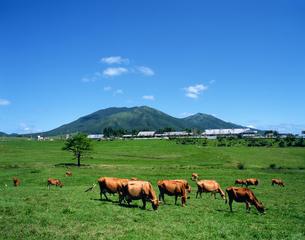 放牧場 岡山県の写真素材 [FYI03881551]
