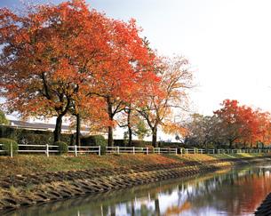 嘉瀬川の紅葉の写真素材 [FYI03881896]