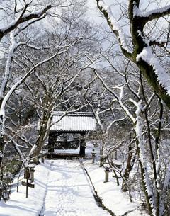 秋月黒門雪景の写真素材 [FYI03881904]