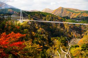 九重夢大吊橋の写真素材 [FYI03881908]