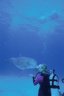イルカと女の子の写真素材 [FYI03882169]
