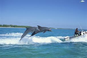 ジャンプするイルカの写真素材 [FYI03882170]
