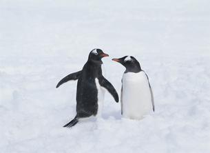 氷の上のペンギンの写真素材 [FYI03882241]