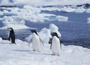 氷の上のペンギンの写真素材 [FYI03882245]