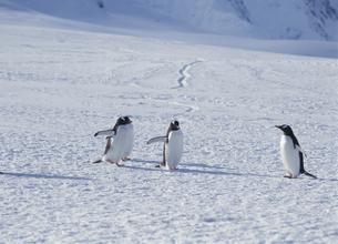 氷の上のペンギンの写真素材 [FYI03882264]