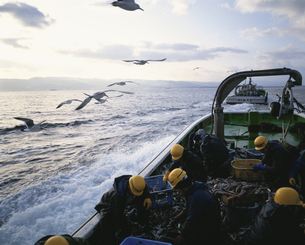 港へ帰る漁船の写真素材 [FYI03882329]