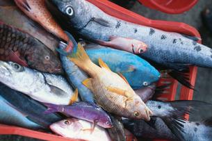 カラフルな熱帯魚の写真素材 [FYI03882592]