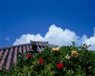 赤瓦の屋根とシーサーの写真素材 [FYI03882812]