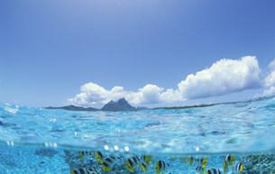 半水面のチョウチョウウオの写真素材 [FYI03882853]