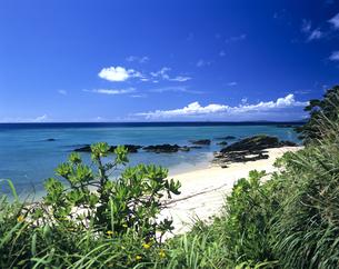 沖縄本島のビーチの写真素材 [FYI03882992]