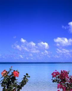 ハイビスカスとブーゲンビリアと海の写真素材 [FYI03883037]