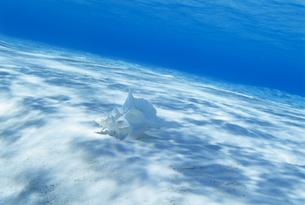 水中の貝殻の写真素材 [FYI03883166]