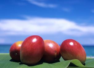 葉の上のマンゴーの写真素材 [FYI03883439]