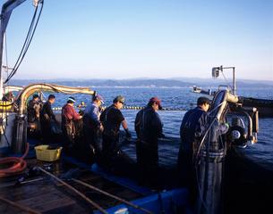 定置網漁 佐渡島の写真素材 [FYI03883620]