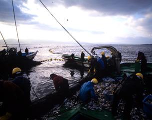 定置網漁 佐渡島の写真素材 [FYI03883624]