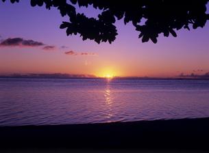 海辺の木陰から見た夕日 ボラボラ島の写真素材 [FYI03883688]