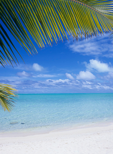 海辺のヤシの葉 ボラボラ島の写真素材 [FYI03883701]