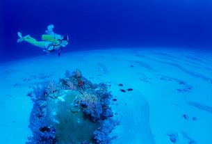 女性ダイバー モルディブの写真素材 [FYI03883782]