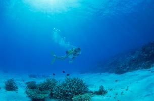 女性ダイバー モルディブの写真素材 [FYI03883814]