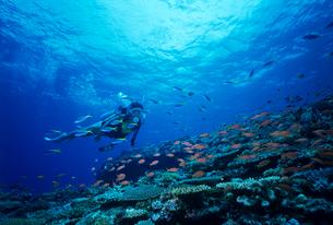 スキューバダイビング 沖縄の写真素材 [FYI03883818]