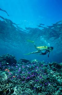 女性ダイバー マレーシアの写真素材 [FYI03883819]