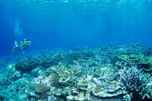 女性ダイバー モルディブの写真素材 [FYI03883820]