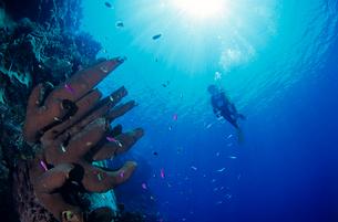 女性ダイバー マレーシアの写真素材 [FYI03883822]