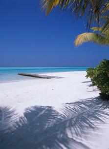 ヤシの木の陰と海 モルディブの写真素材 [FYI03883858]