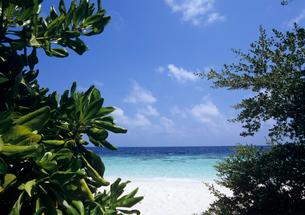 樹の間から見た海と雲 モルディブの写真素材 [FYI03883917]