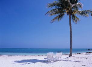 砂浜のデッキチェアとヤシの木の写真素材 [FYI03884162]