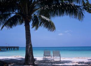 砂浜のイスとヤシの木の写真素材 [FYI03884174]